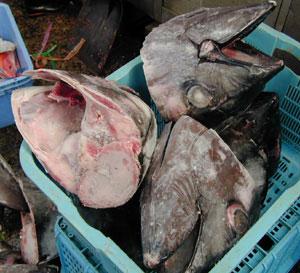 Sake Drenched Postcards The Tsukiji Fish Market